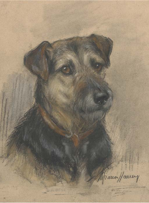 Click to see full size: The head of a terrier- Coloured chalks 11.25 x 8.25 in. (28.4 x 20.9 cm.)