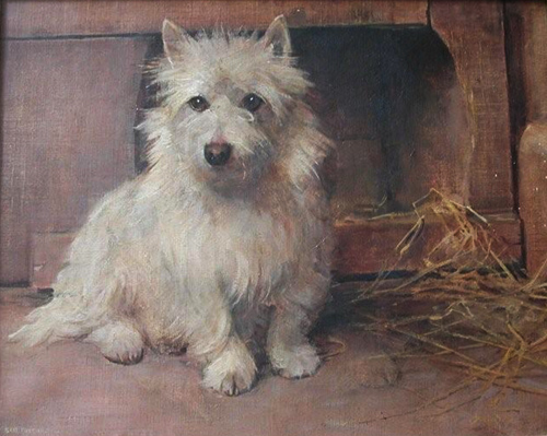 Click to see full size: West Highland Terrier painting by Samuel Fulton (1855-1944)