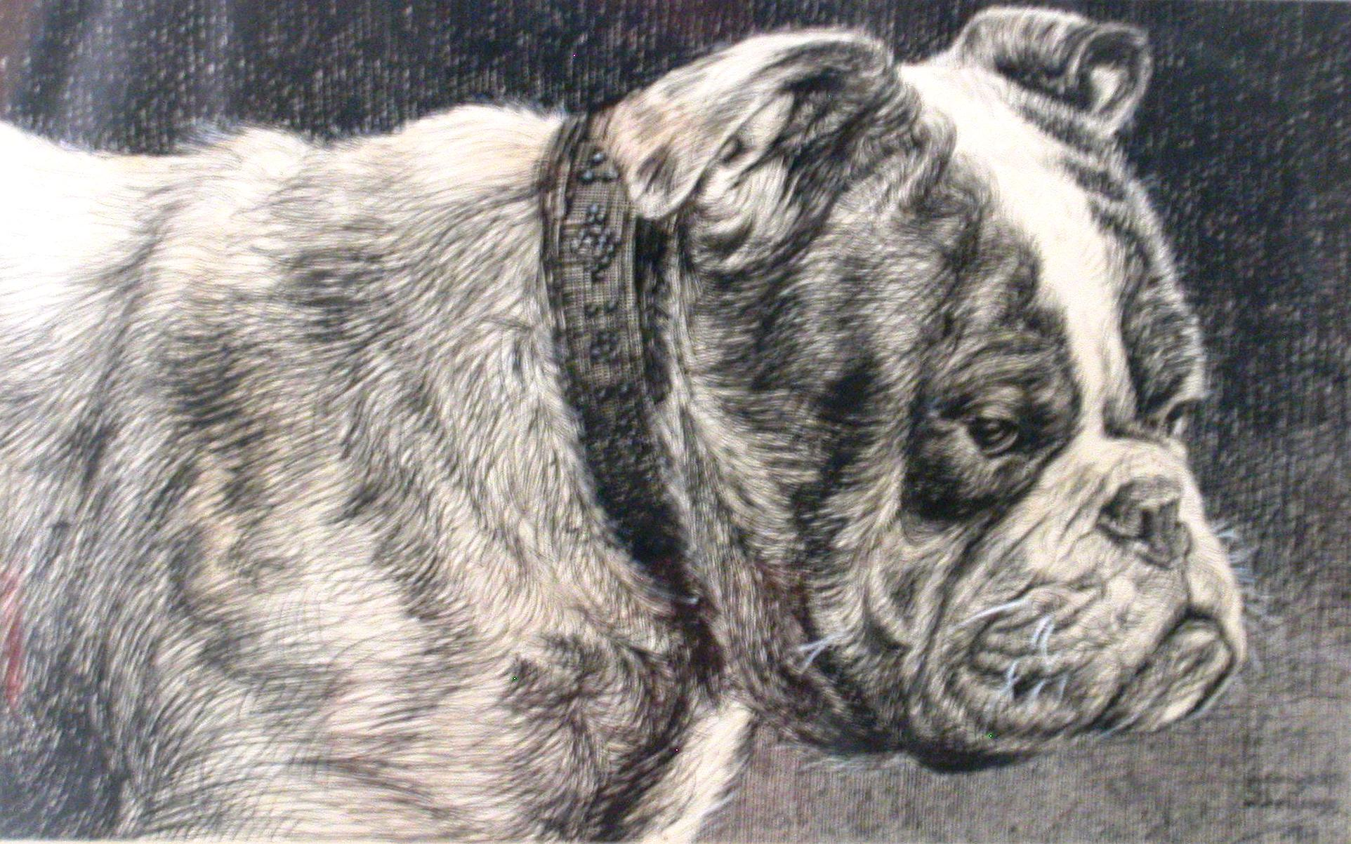 Click to see full size: English Bulldog- 1917
