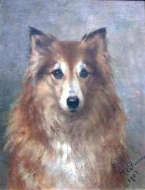 Click to see full size: Shetland Sheepdog- Signed and Dated, F.Fairman/1902
