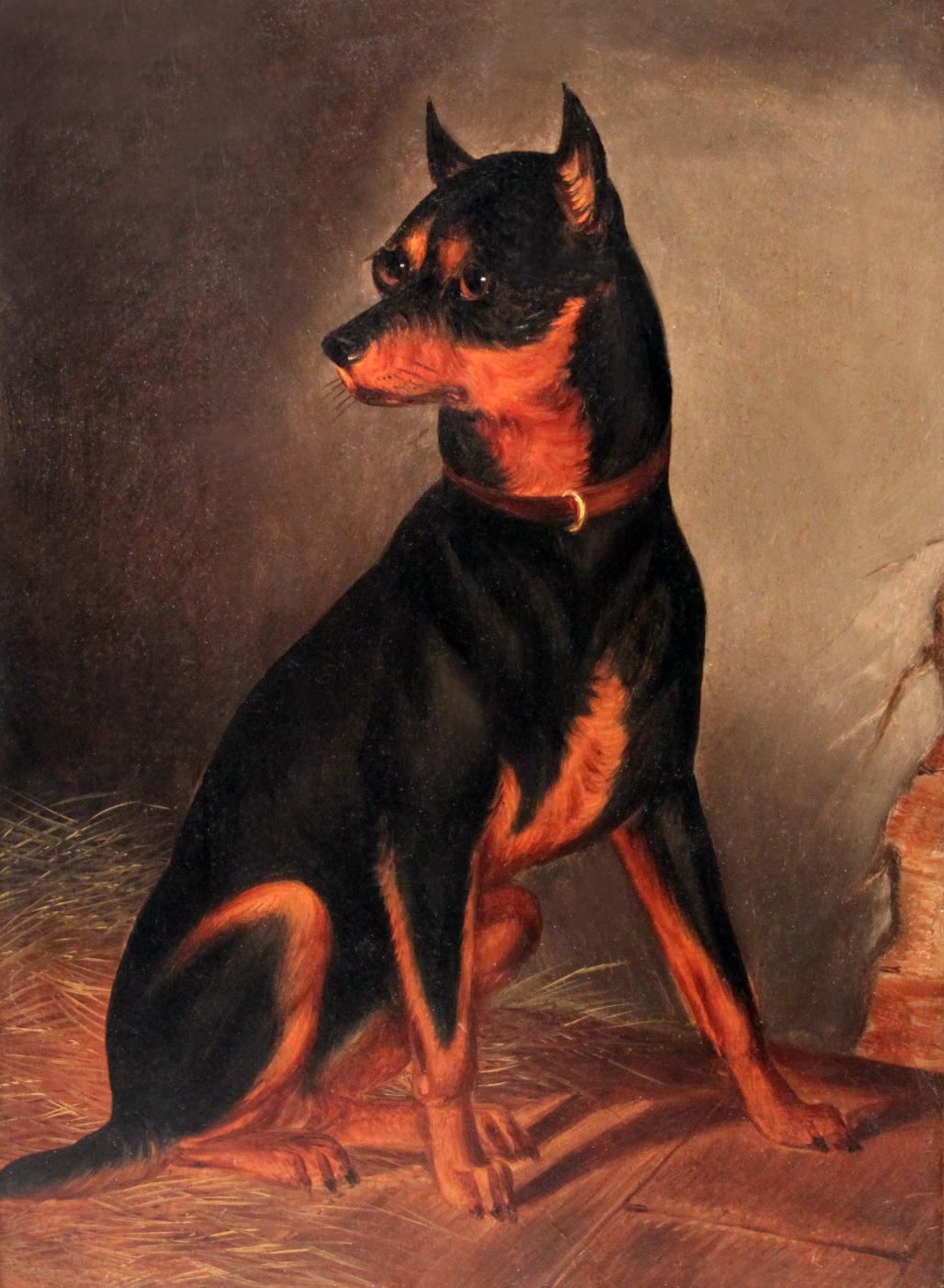 Click for larger image: Manchester Terrier oil painting - Manchester Terrier oil painting