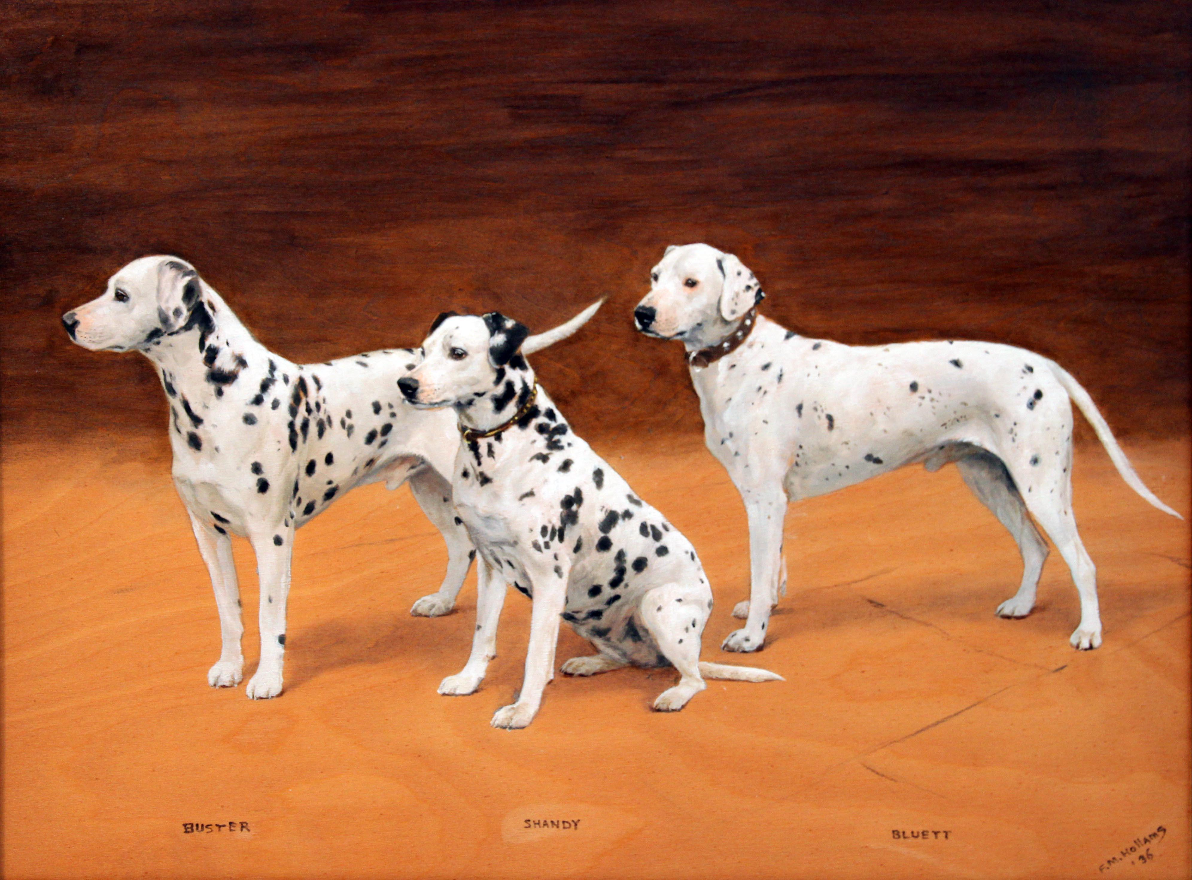 Click to see full size: Dalmatians