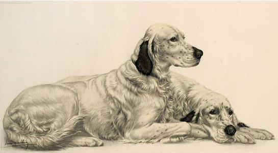 Click to see full size: Laverack Setters by  Leon Danchin