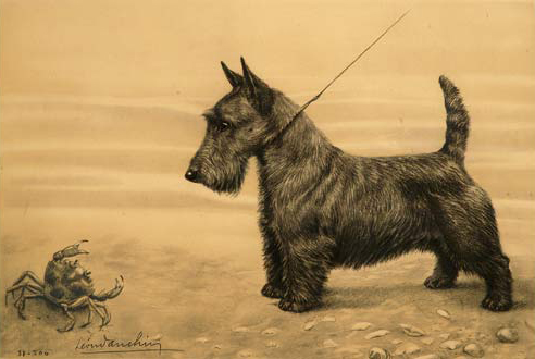 Click to see full size: Scottish Terrier and crab by Leon Danchin