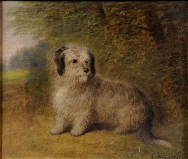 Click to see full size: A oil on canvas of a seated Dandie Dinmont by George Morley (1831-1889).
