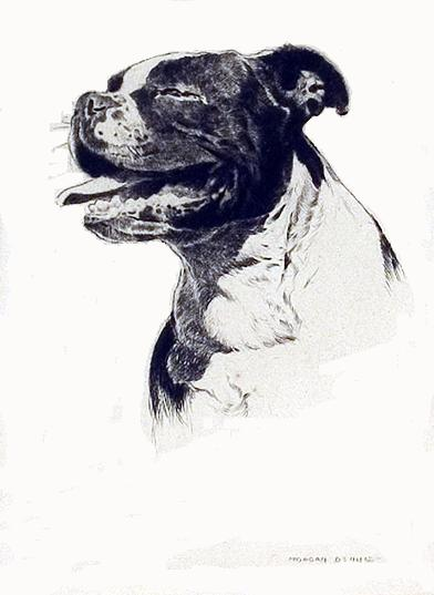 Click to see full size: Bull Terrier by Morgan Dennis  (1892 -1960)- Bull Terrier by Morgan Dennis  (1892 -1960)
