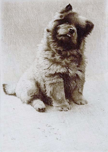 Click to see full size: Miniature drypoint etching of the Chow Chow