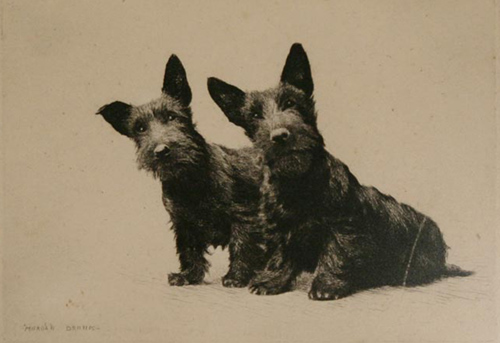 Click to see full size: Scottish Terriers,