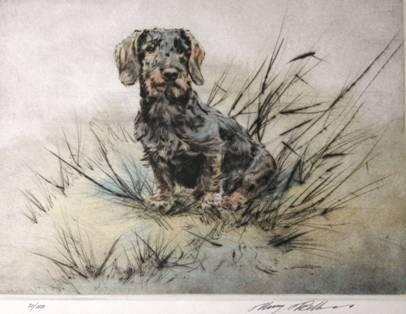Click to see full size: Wire-haired Dachshund by Henry Wilkinson RE,ARCA.