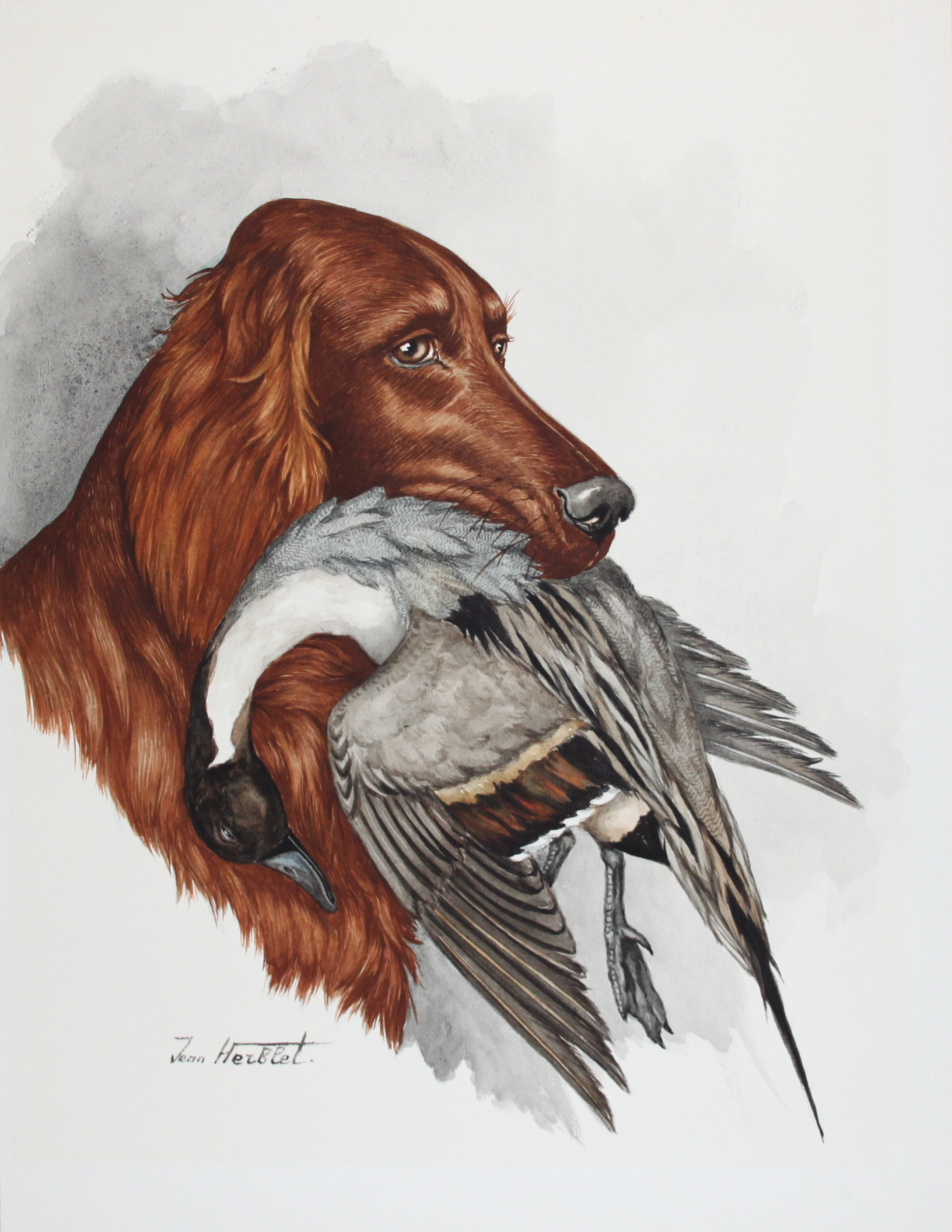 Click to see full size: Irish Setter with a duck by Jean Herblet (1893-1985)- Irish Setter with a duck by Jean Herblet (1893-1985)