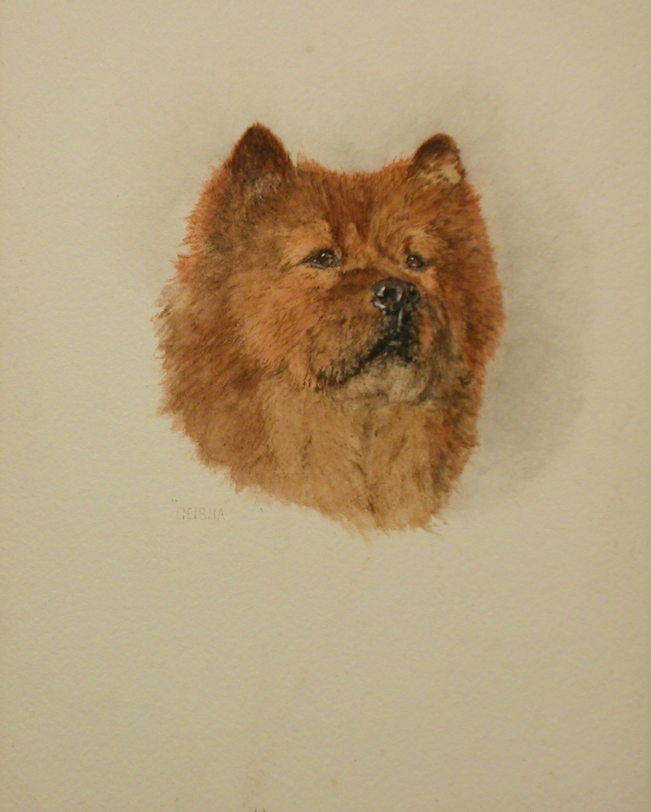 Click to see full size: Chow Chow