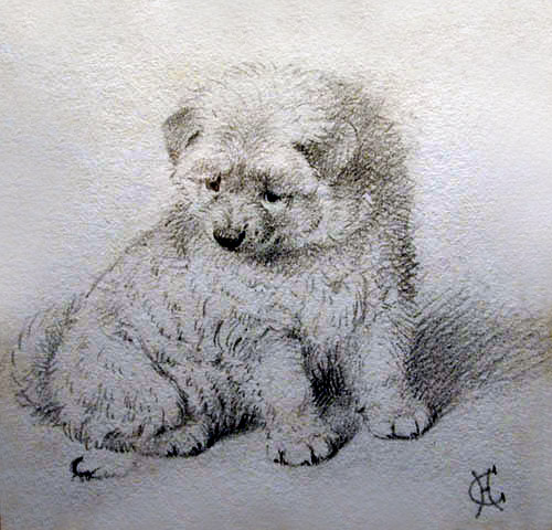 Click to see full size: Pen & ink Samoyed by Horatio Henry Couldery (1832-1893)