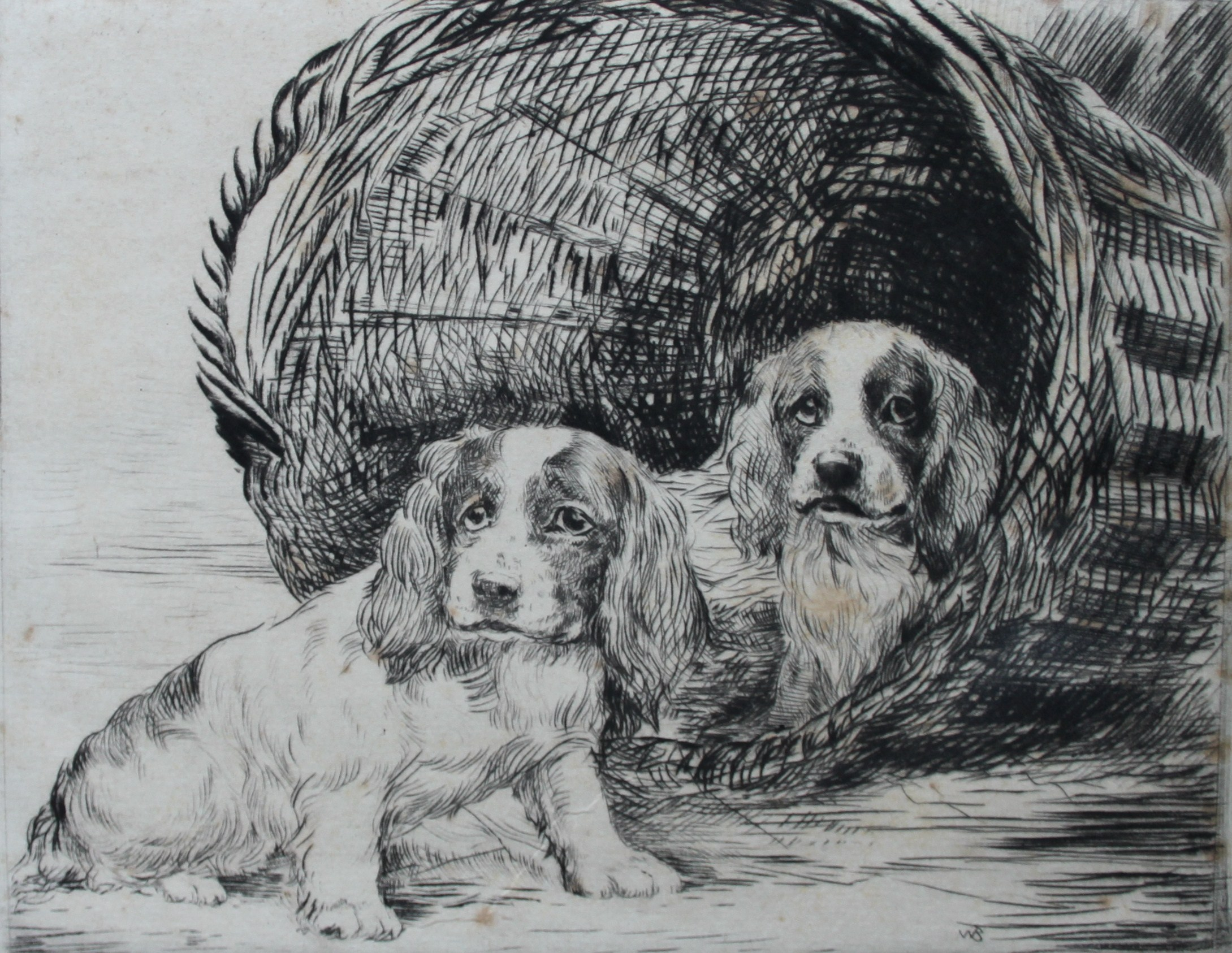 Click to see full size: Springer Spaniel puppies ?Just Arrived? etching by Ruben Ward Binks (1880-1950