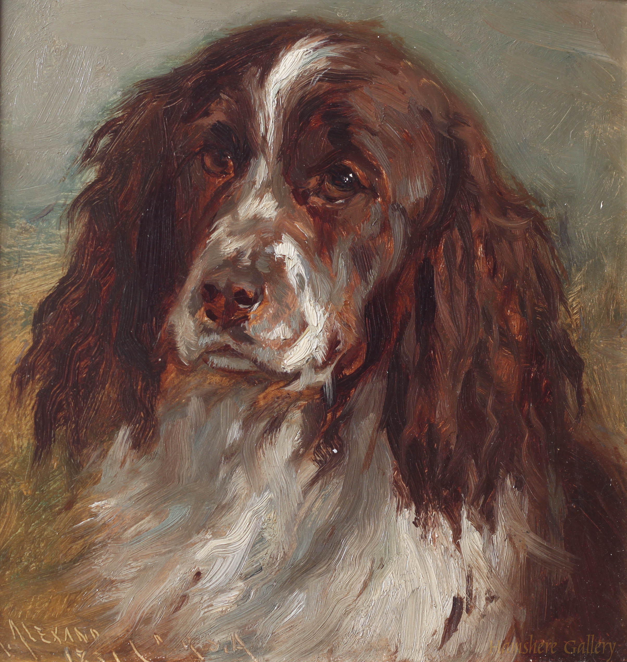 Click to see full size: Oil of a Springer Spaniel by Robert L Alexander