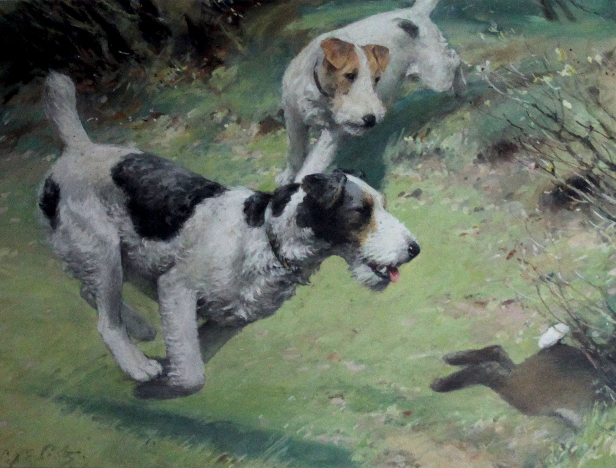 Click to see full size: Fox Terriers in watercolour and gouache by Septimus Scott(1879-1965)