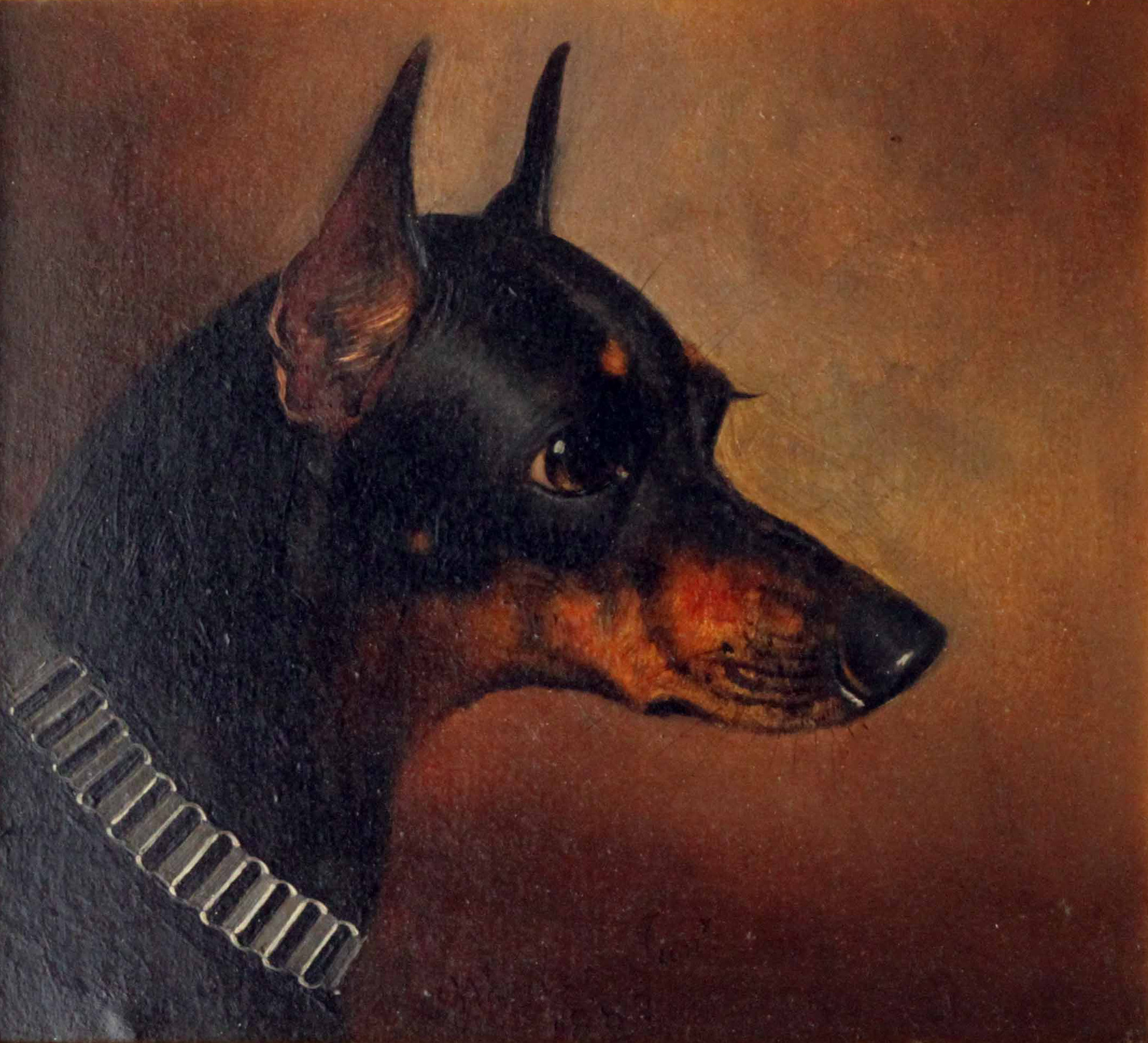 Click to see full size: A Wheeler Pinxt, oil on board of a Manchester Terrier by Alfred