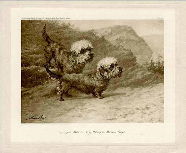 Click for larger image: Photogravure of the Dandie Dinmonts Champion Milverton Lady and Champion Milverton King after the painting by Maud Earl (English, 1863-1943)  ?Published by Fawcett McQuire & Co. Limited Birkbeck Bank Chambers London? and ?Copyright? for the rare edition o - Photogravure of the Dandie Dinmonts Champion Milverton Lady and Champion Milverton King after the painting by Maud Earl (English, 1863-1943)<br /> <br /> ?Published by Fawcett McQuire & Co. Limited Birkbeck Bank Chambers London? and ?Copyright? for the rare edition of ?Dogs  by  Well-known Authorities? edited by Harding Cox (1906)<br /> <br /> English 1906<br />