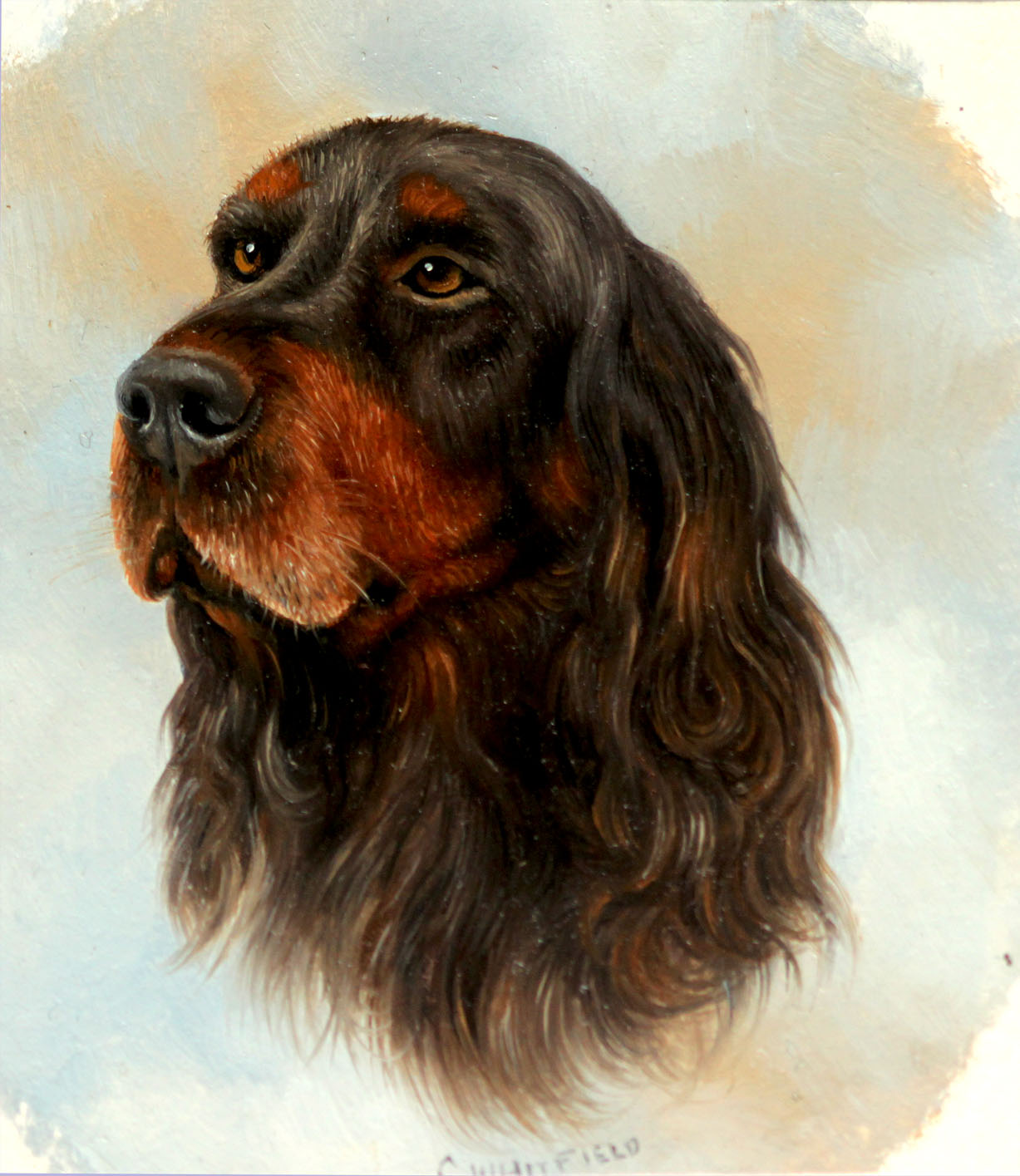 Click to see full size: Miniature on card of a Gordon Setter by Carl Whitfield