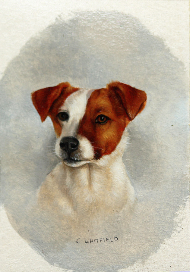 Click to see full size: Miniature on card of a Jack Russell by Carl Whitfield