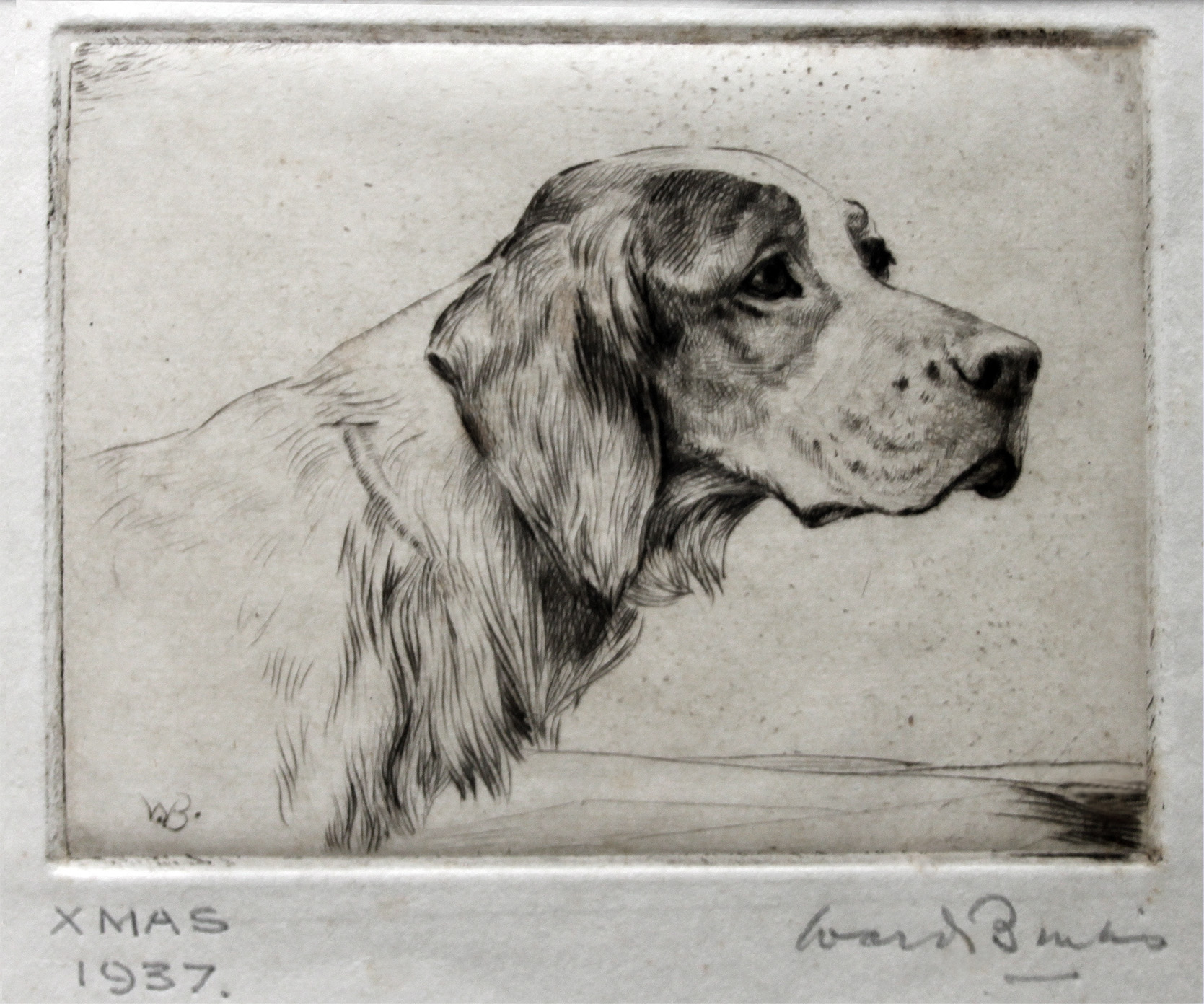 Click to see full size: English Setter etching by Ruben Ward Binks