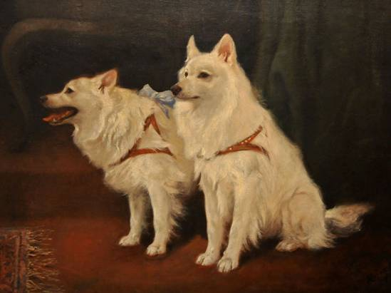 Click to see full size: Oil on canvas of a pair of seated Samoyed dogs by Arthur Heyer (German 1872-1931)