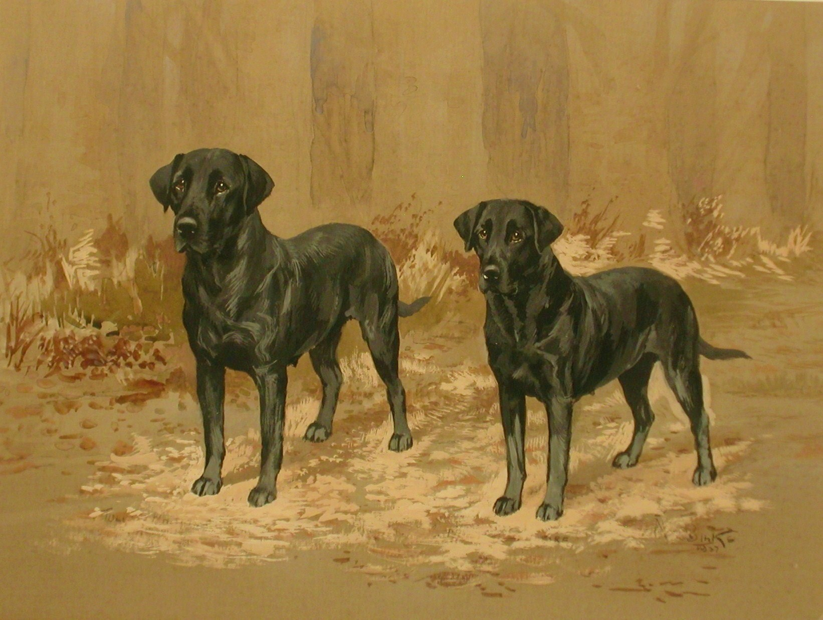 Click to see full size: Thomas W Twyford Whitmore Labrador Retriever by Reuben Ward Binks