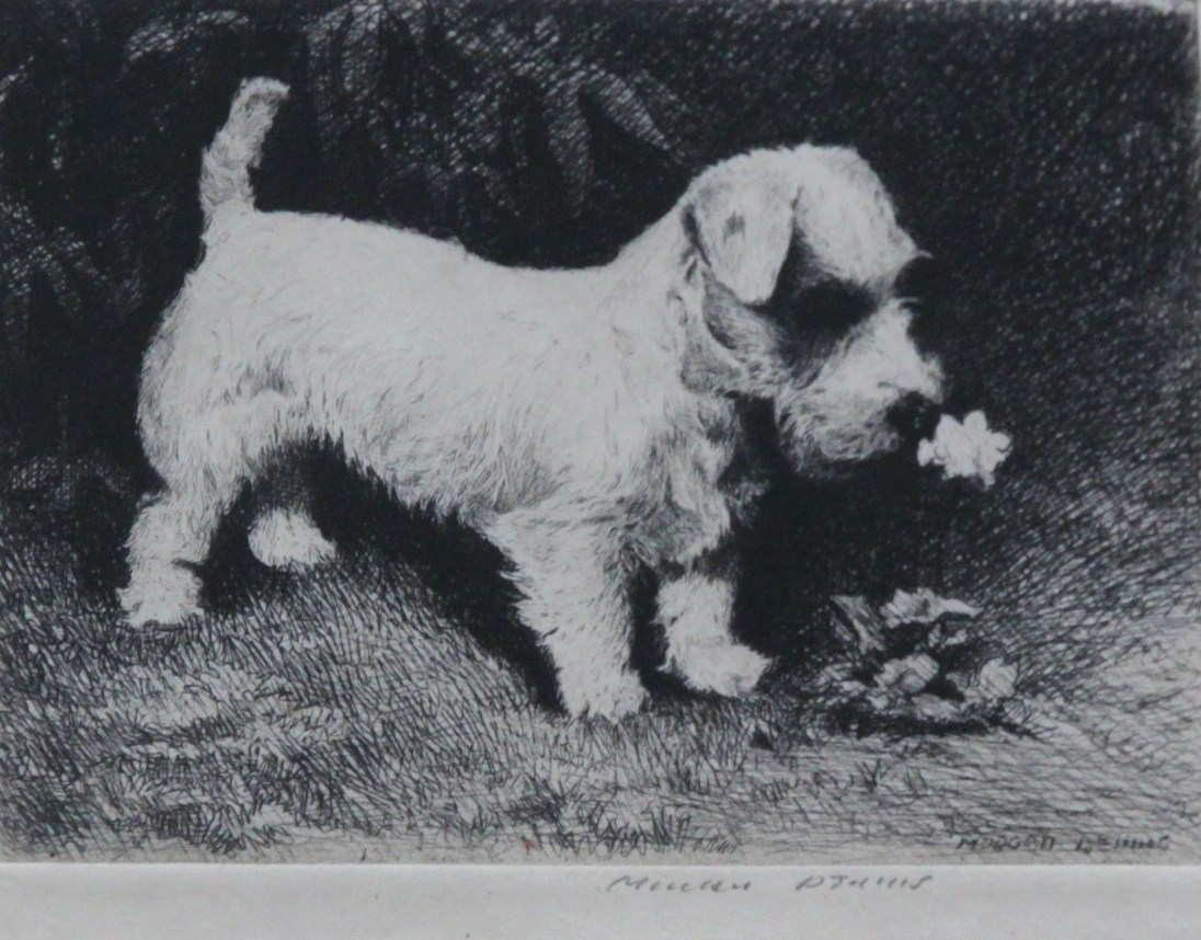 Click to see full size: Scottish Terrier and Puppy by Morgan Dennis (1892-1960)