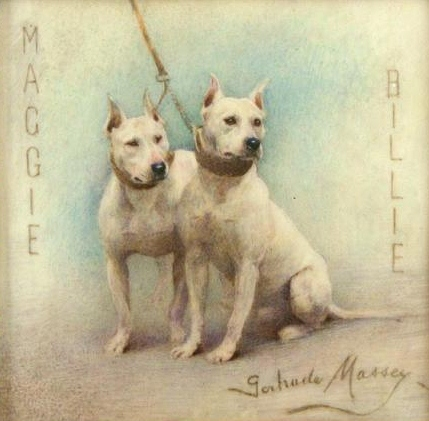 Click to see full size: Bull Terriers