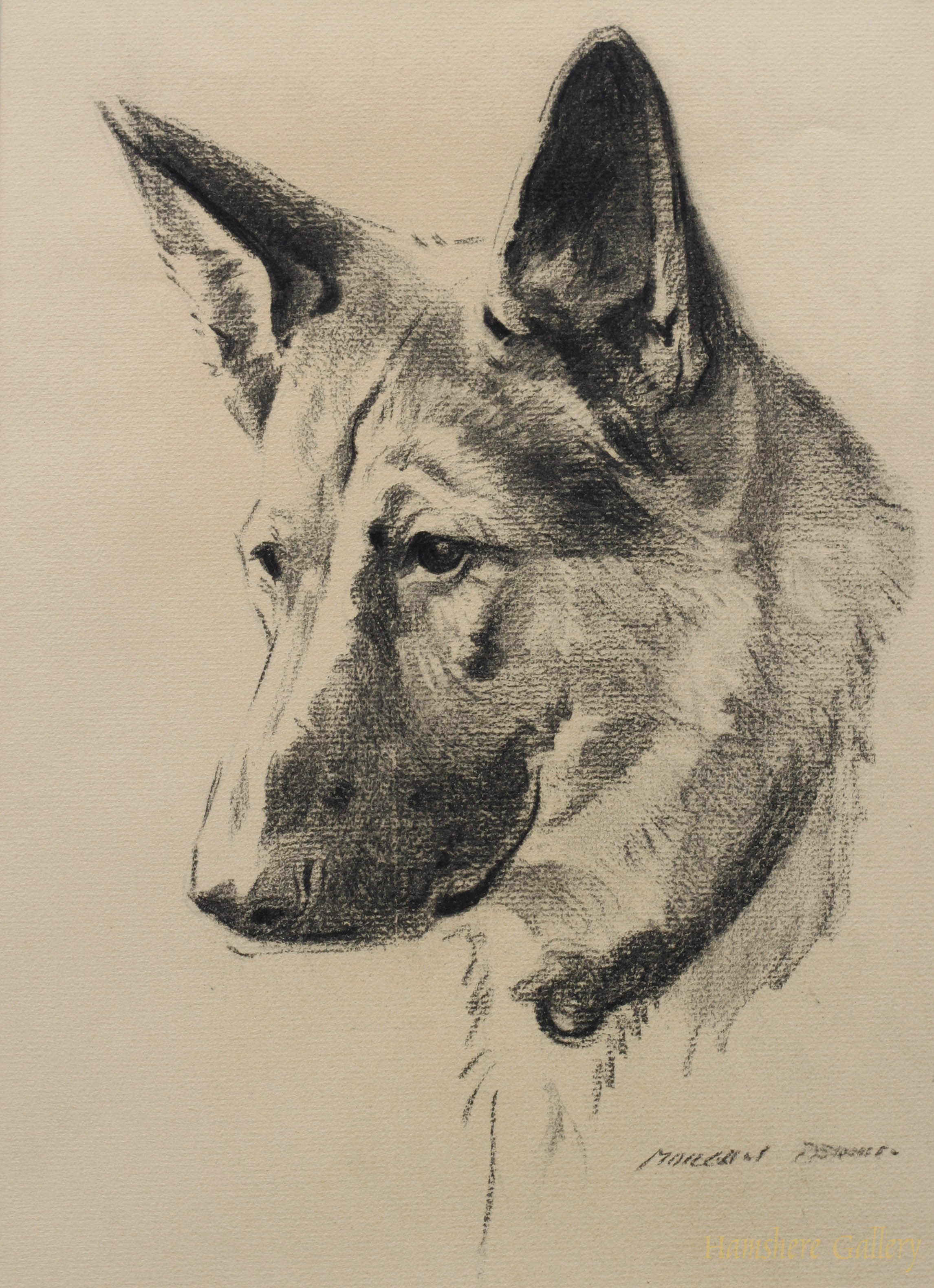 Click to see full size:  German Shepherd by Morgan Dennis