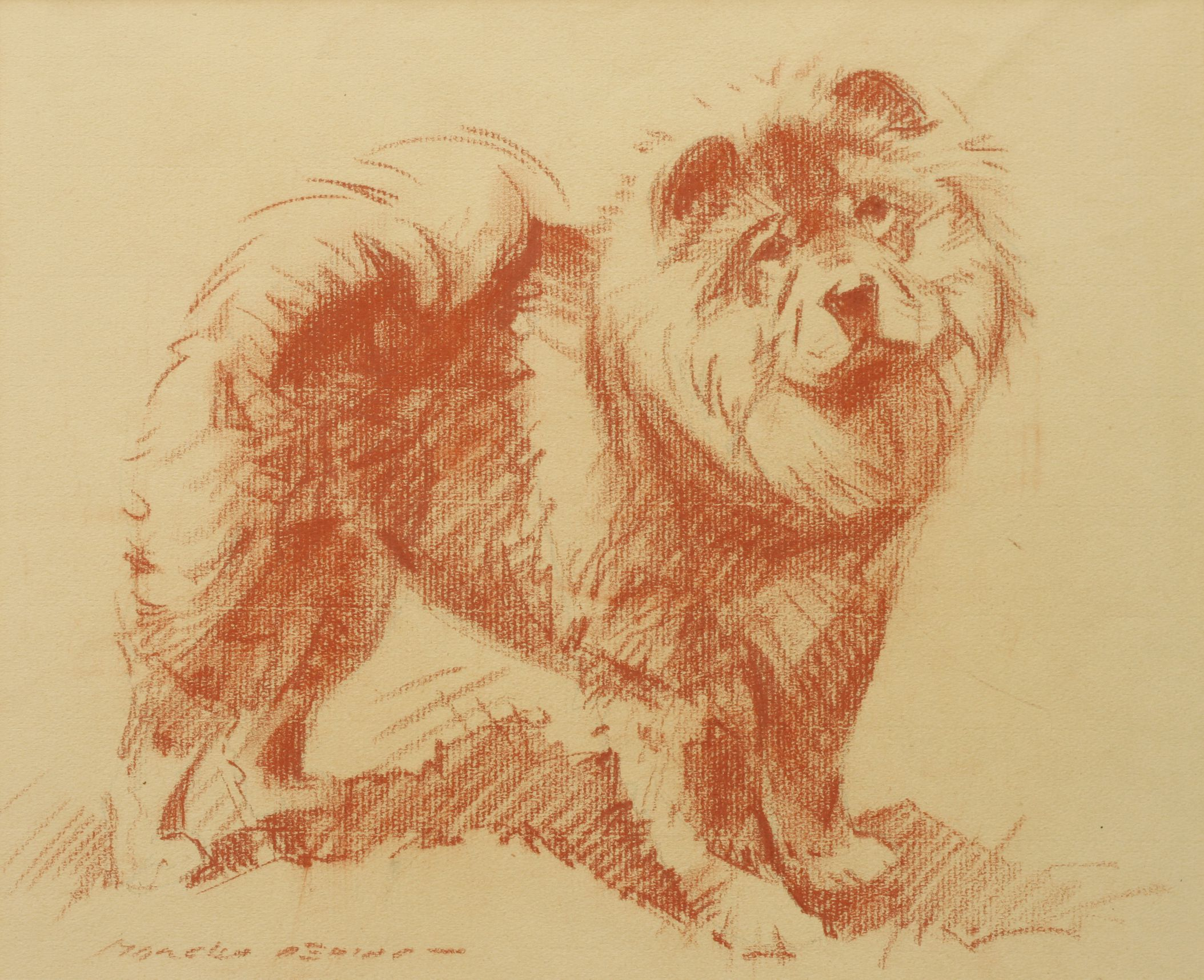 Click to see full size: A red crayon drawing of standing Chow Chow by Morgan Dennis (American, 1892-1960)