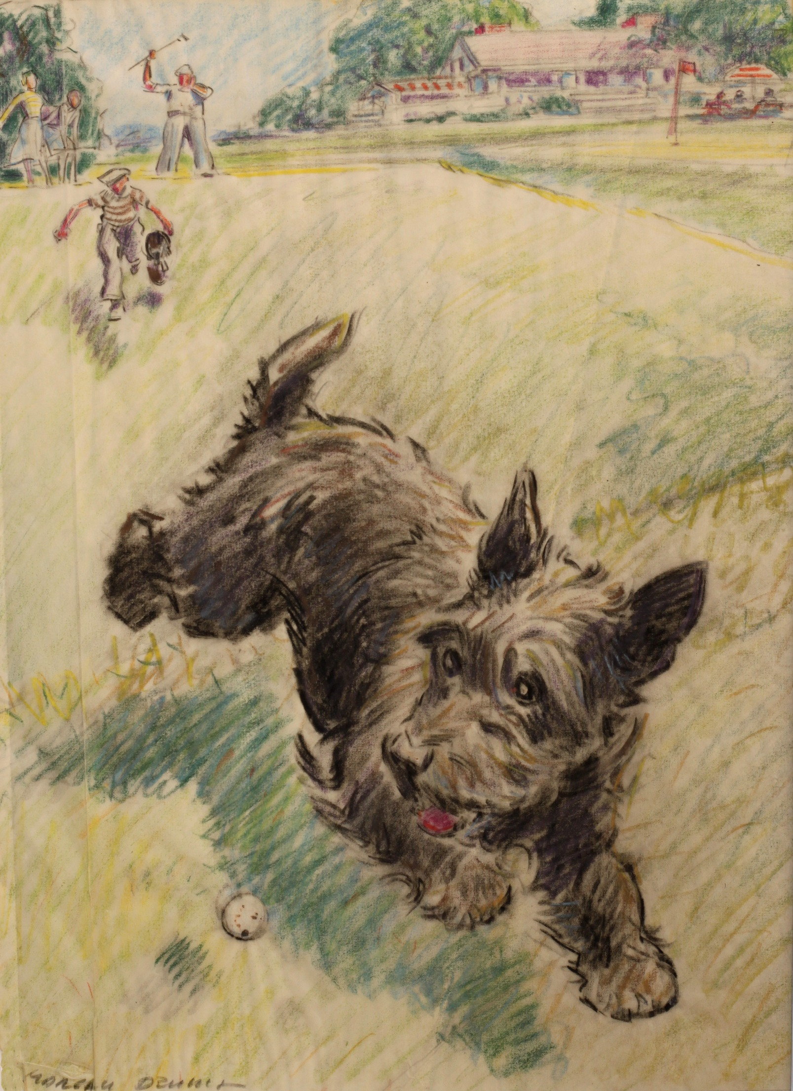Click to see full size: Coloured pencil drawing of Scottish Terrier chasing a golf ball by Morgan Dennis