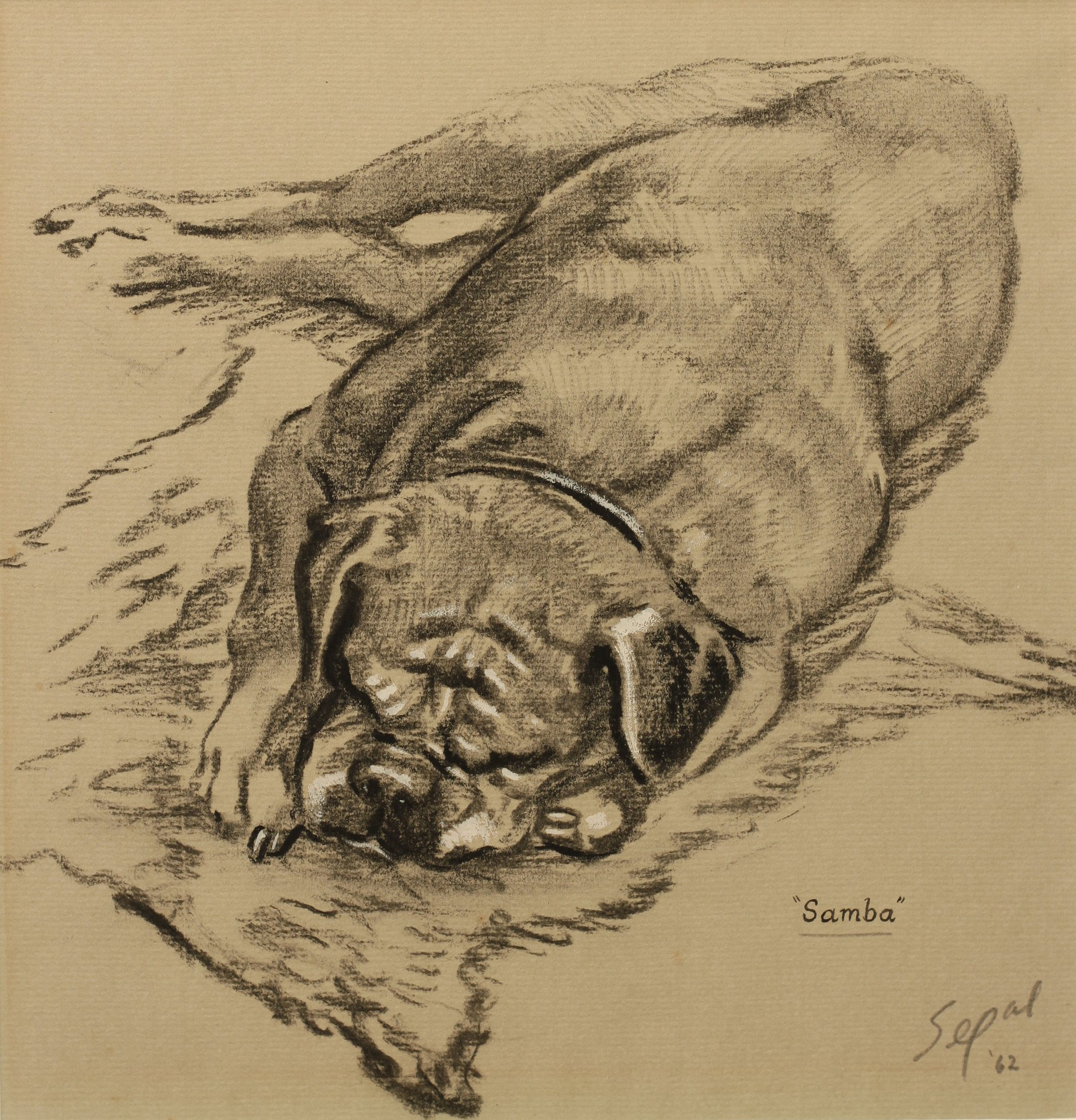 Click to see full size: Charcoal drawing on laid coloured paper of a Pug sleeping on a rug
