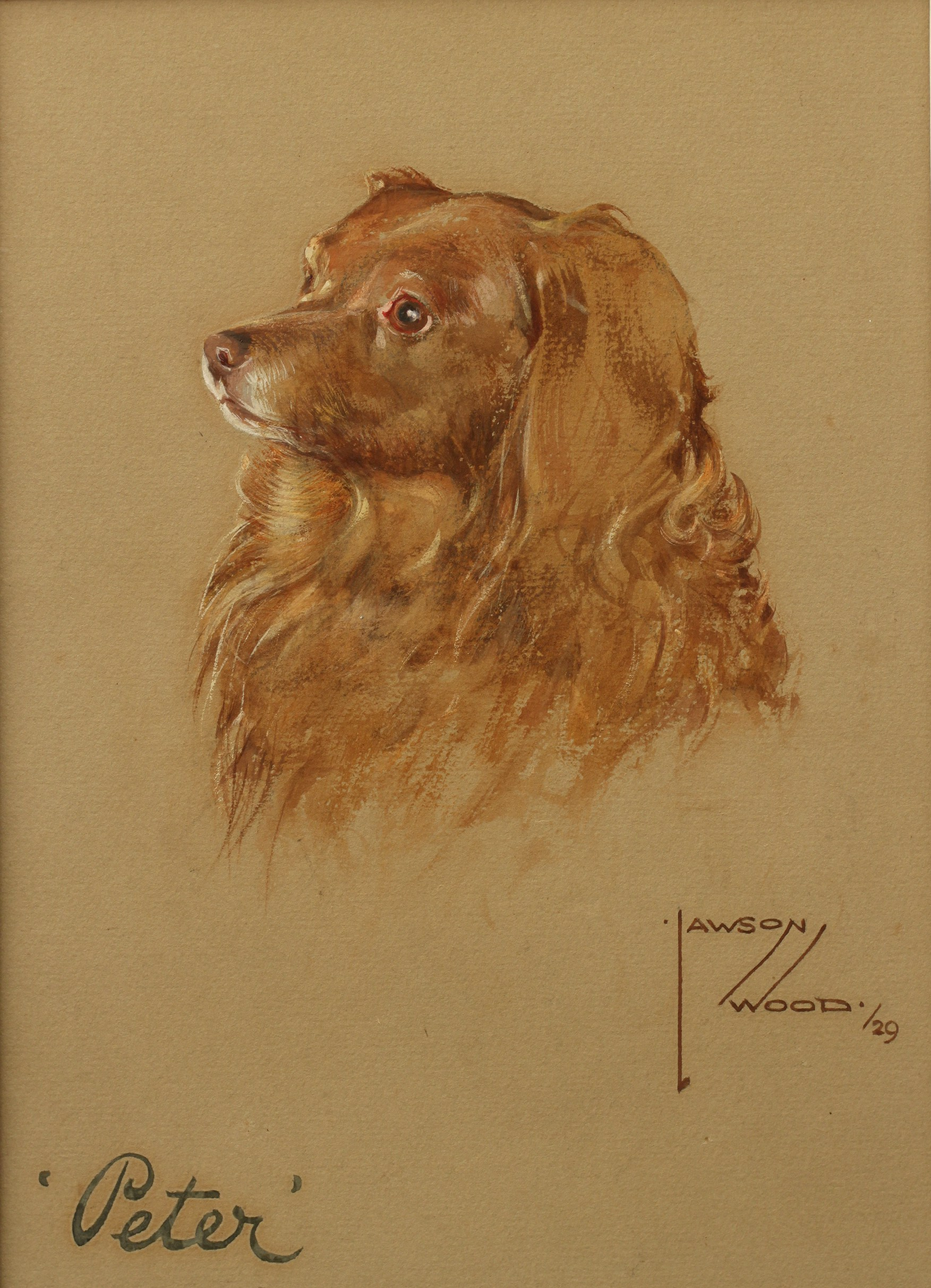 Click to see full size: Water colour on paper of a head study of a liver coloured Long-Haired Dachshund by Lawson Wood