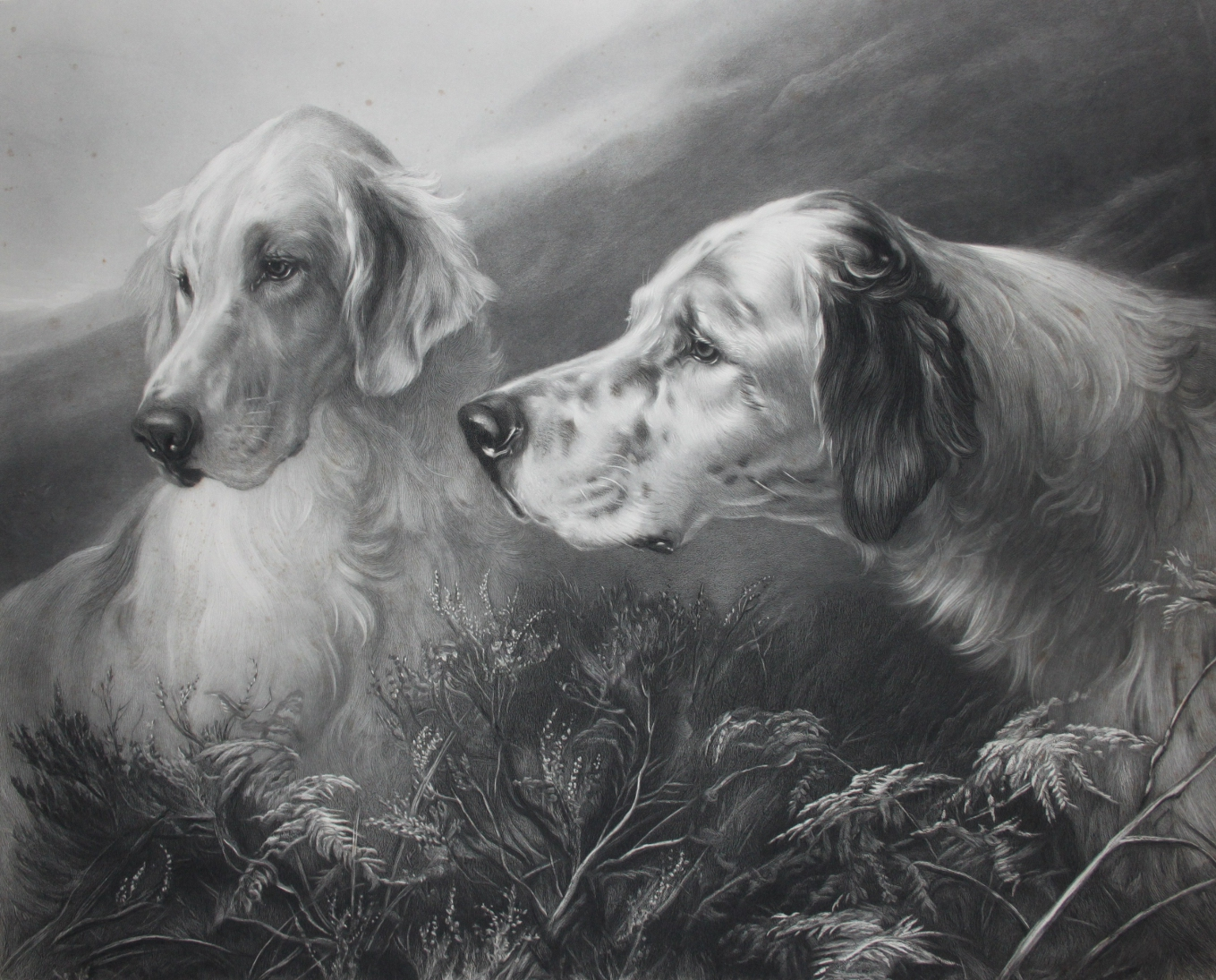 Click to see full size: Etching of English Setters by Joseph Bishop Pratt (1854-1910) after Heywood Hardy