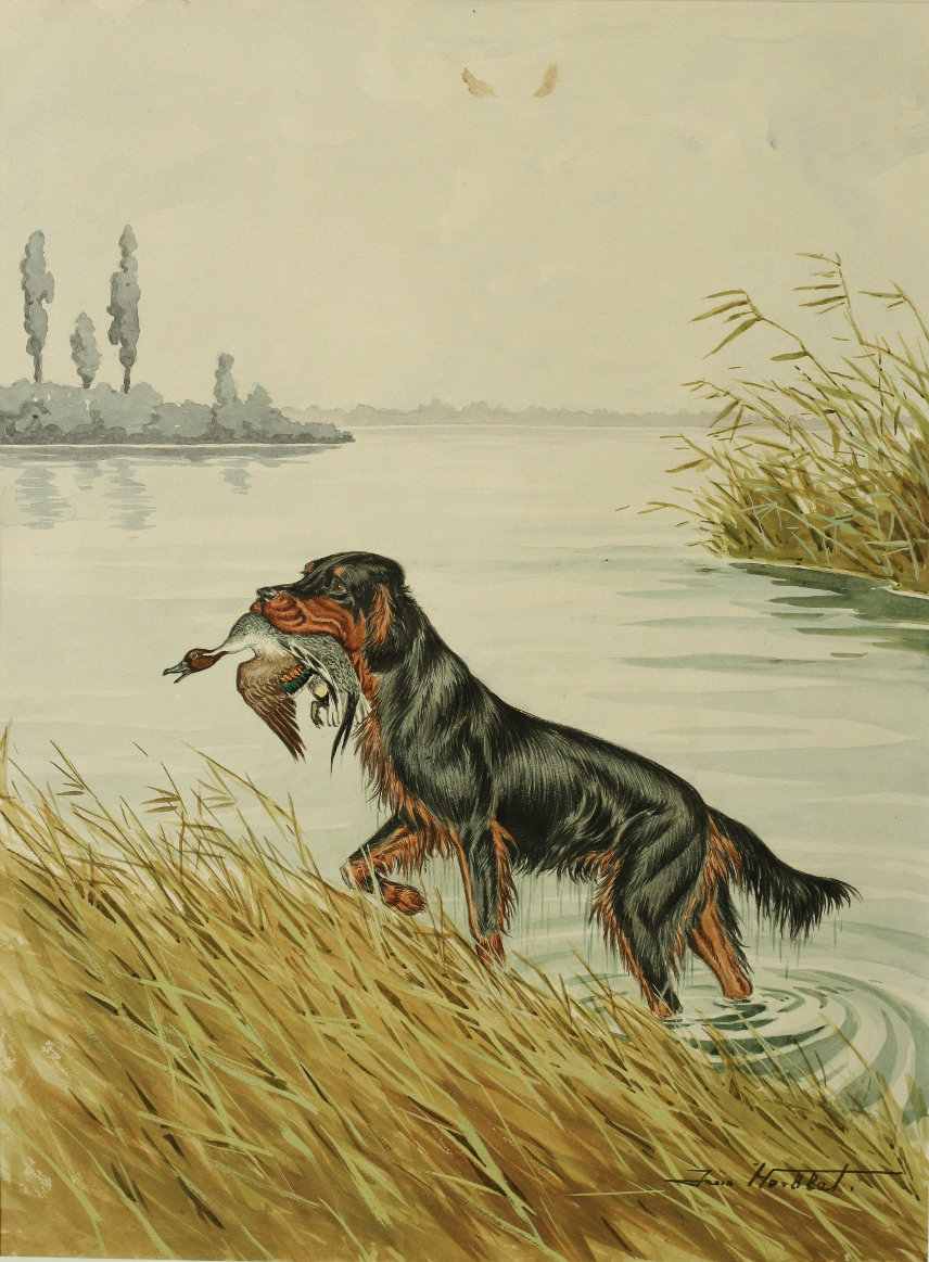 Click to see full size: Watercolour of a Gordon Setter duck by Jean Herblet (French, 1893-1985)