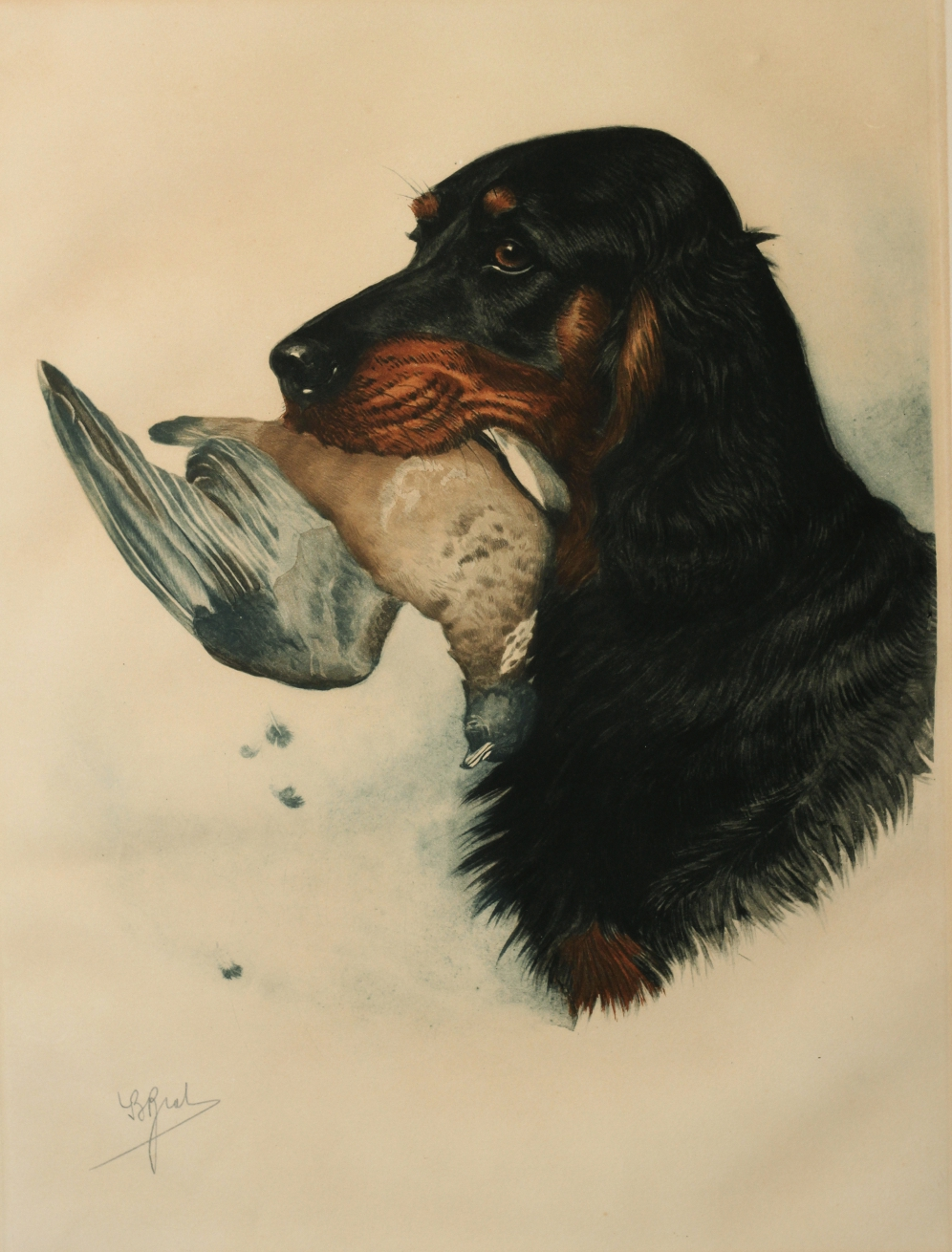 Click to see full size: Etching of a Gordon Setter with Mallard by Boris Stefanovitch Riabouchinsky