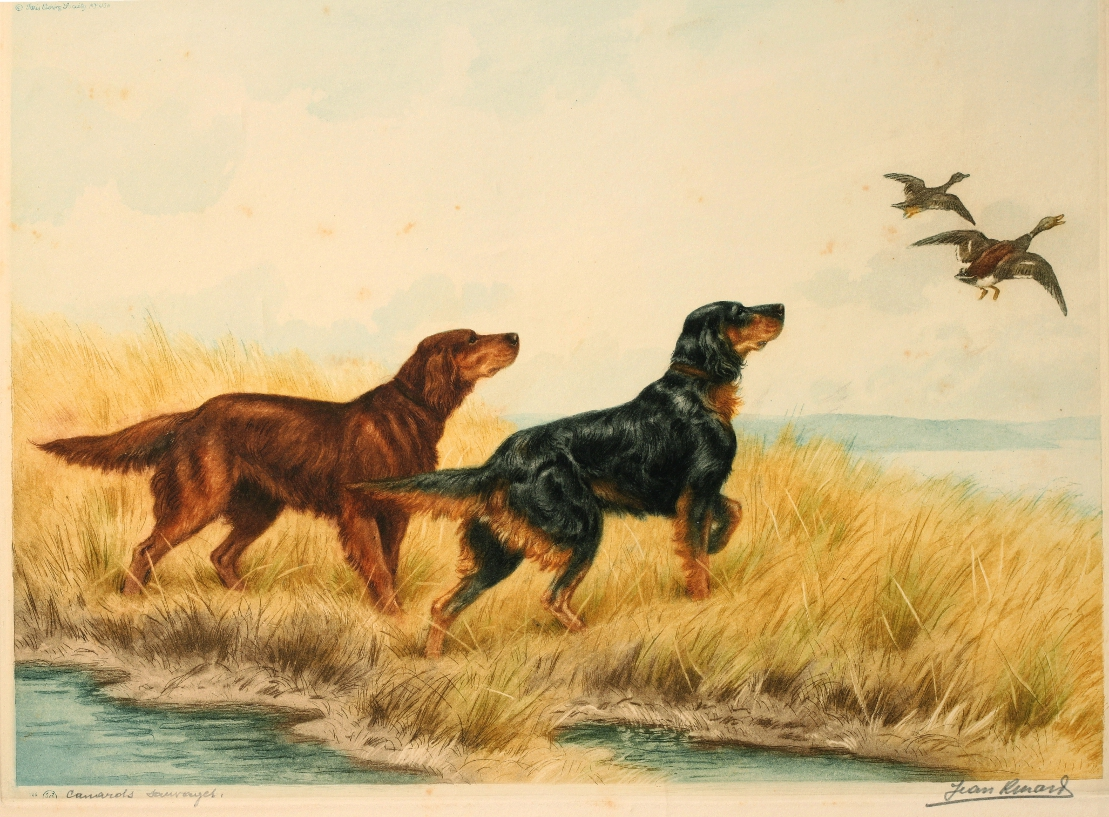 Click to see full size: A Gordon and Irish Setter aquatint etching by Jean-Charles Renaud (French, 1891-1958)