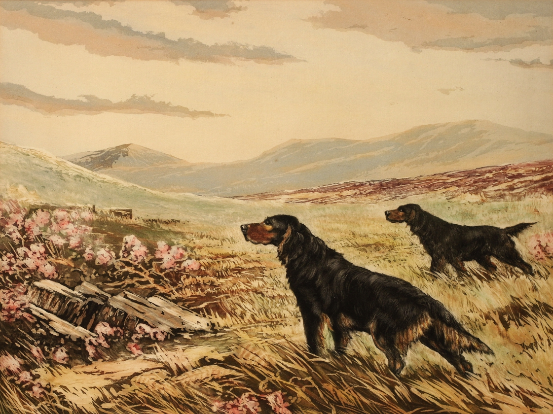 Click to see full size: Aquatint etching a Gordon Setter Steady by Reuben Ward Binks