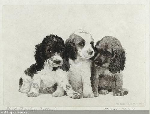 Click to see full size: Dry-point etching ?Stick Together, Fellas?, of Cocker Spaniel puppies by Morgan Dennis