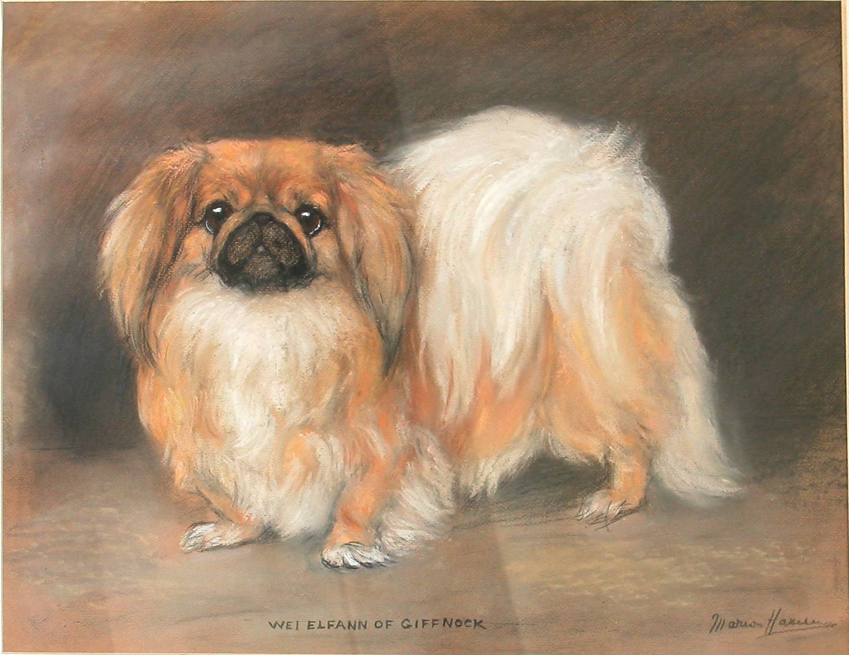 Click to see full size: A Pekingnese oil pastel by Marion Harvey