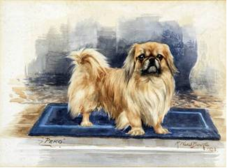 Click to see full size: Watercolour of a Pekingese by Ruben Ward Binks (1880-1950)