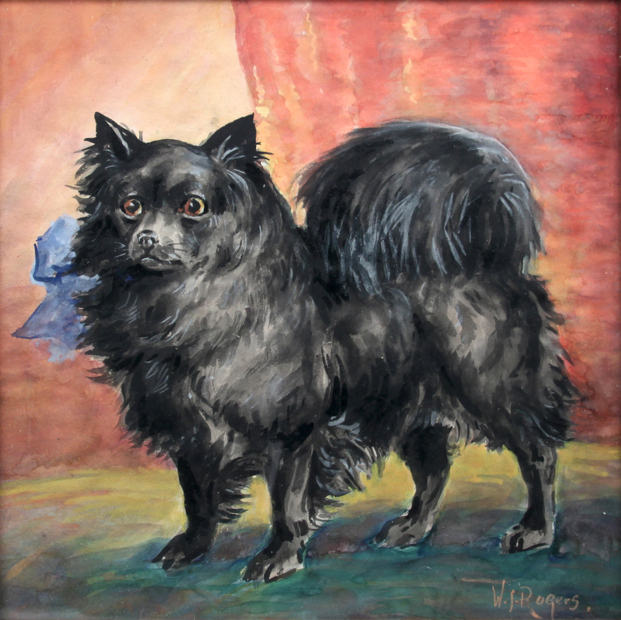 Click to see full size: Pomeranian by Franklin Whiting Rogers (American, 1854-1917)