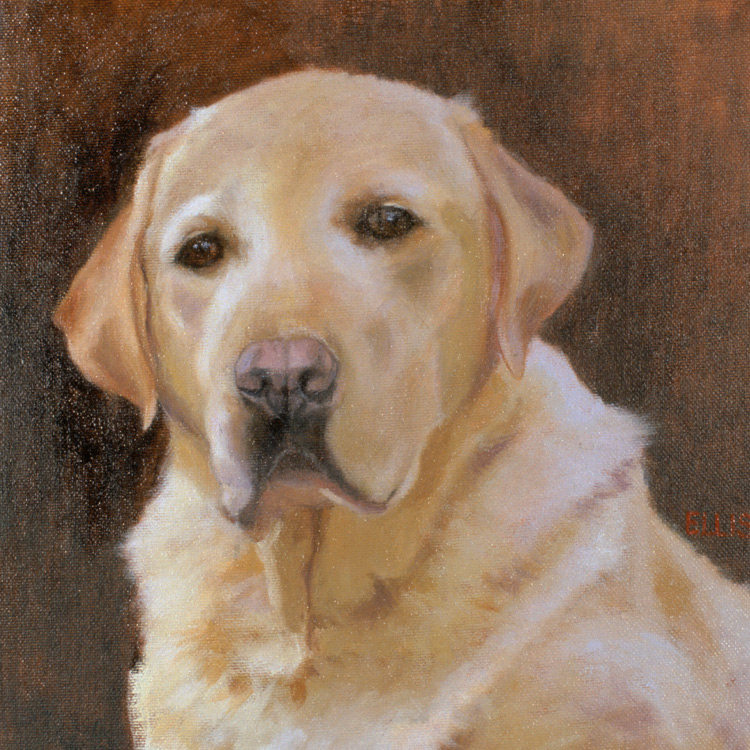Click to see full size: Labrador - Commission