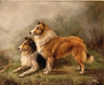 Click to see full size: Rough Collie Dogs