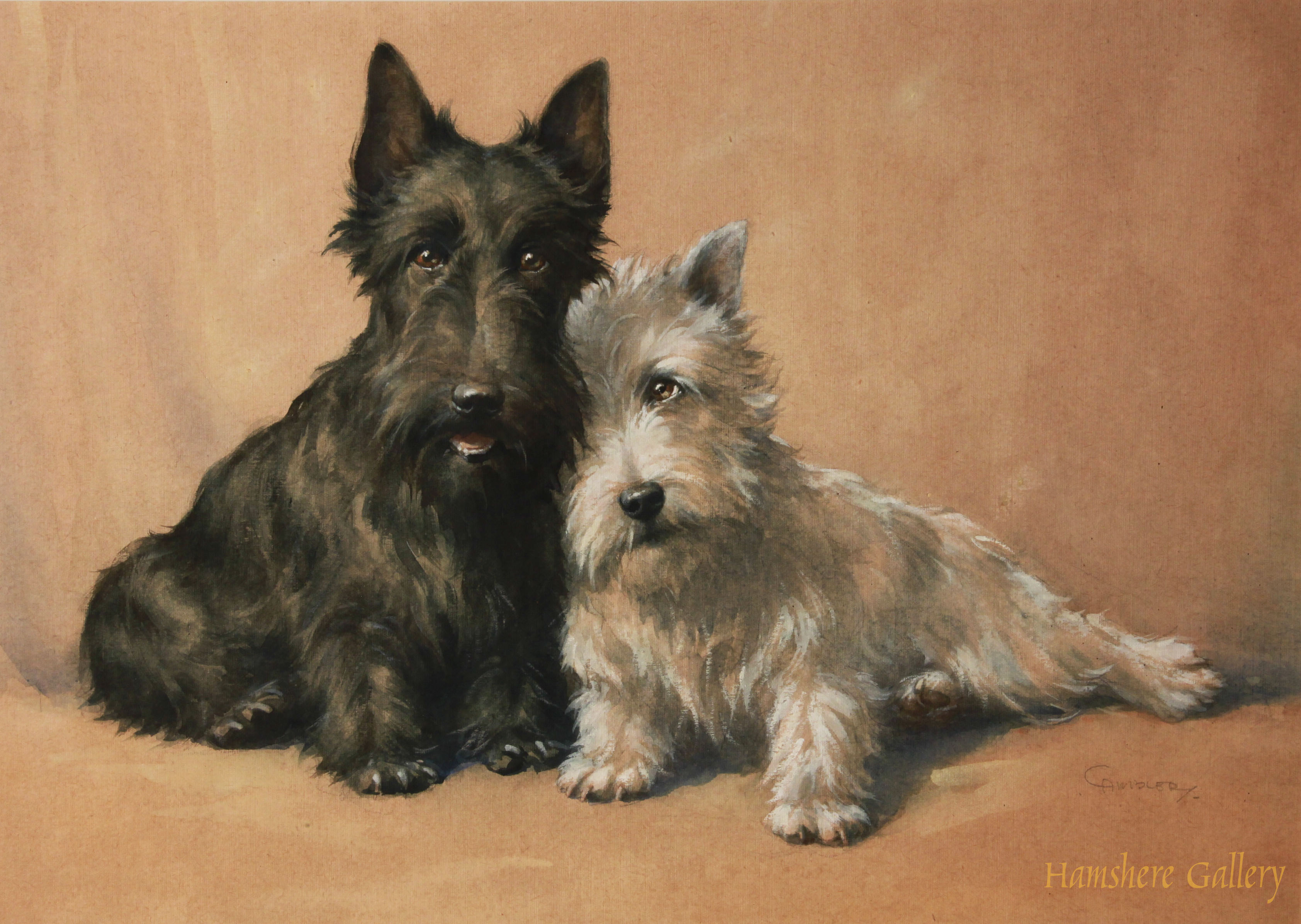 Click to see full size: Black and White Scottish Terrier