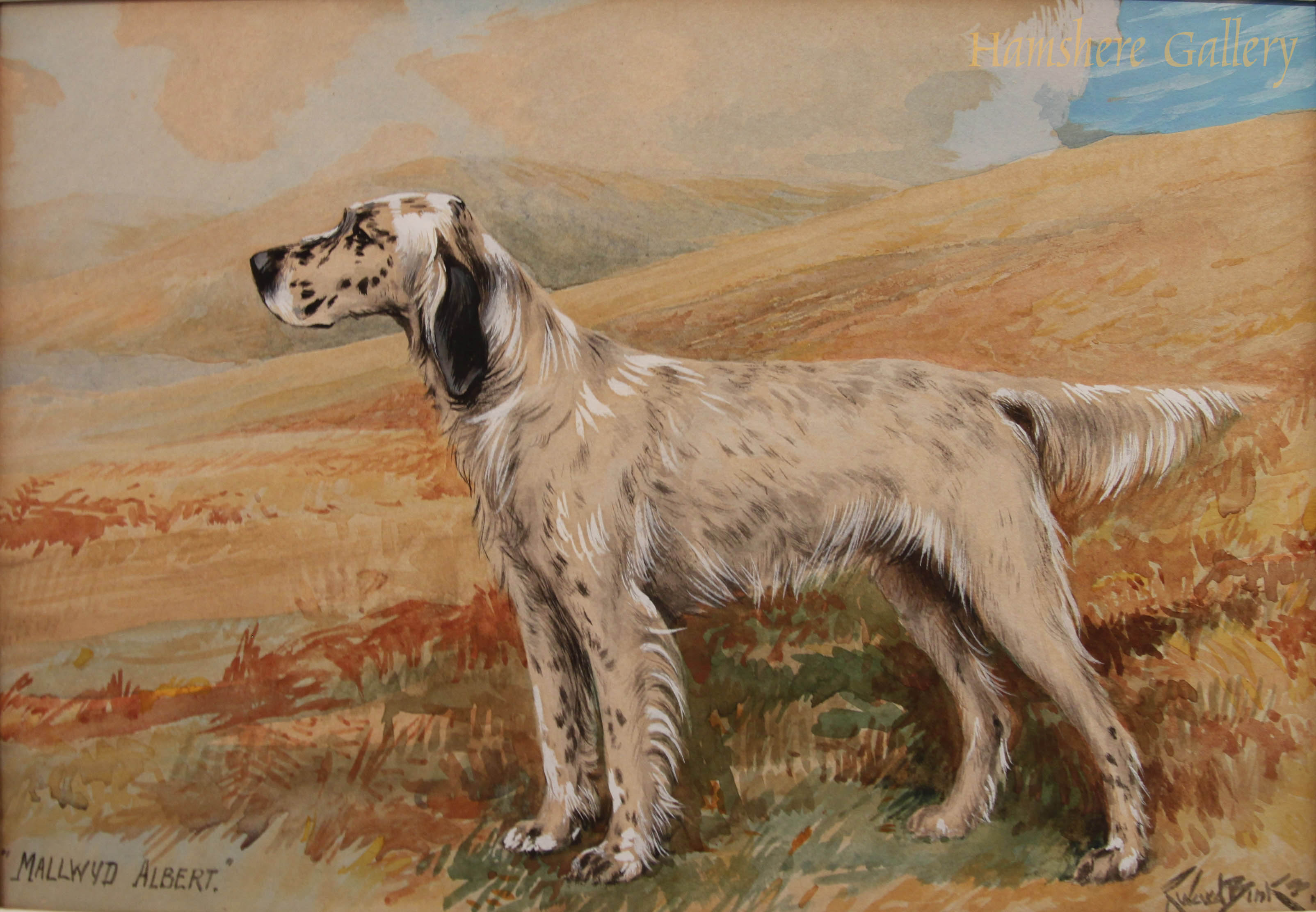 Click to see full size: English Setter