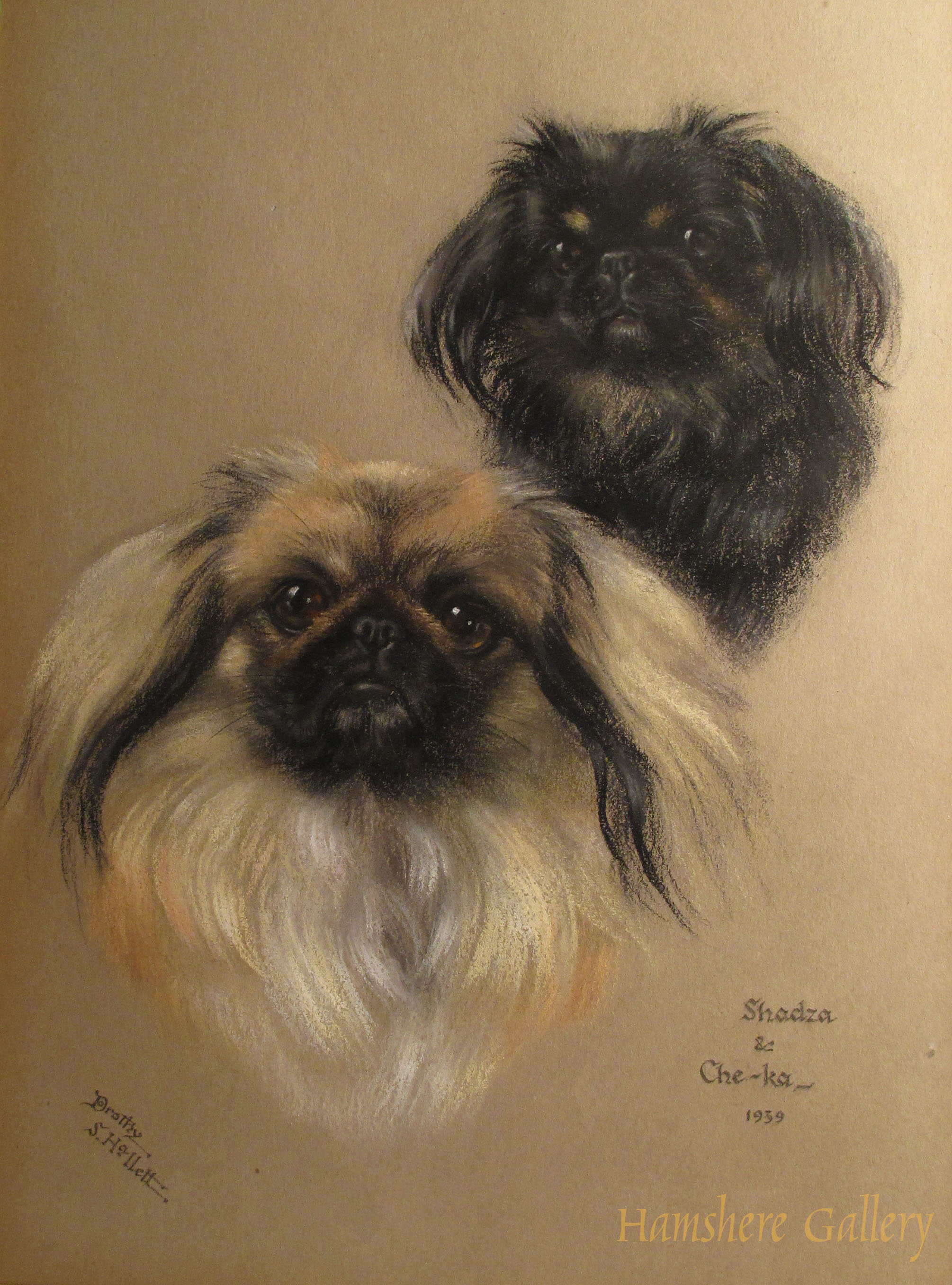 Click to see full size: The Pekingese �Shadza� and �Che-ka� by Miss Dorothy S Hallet