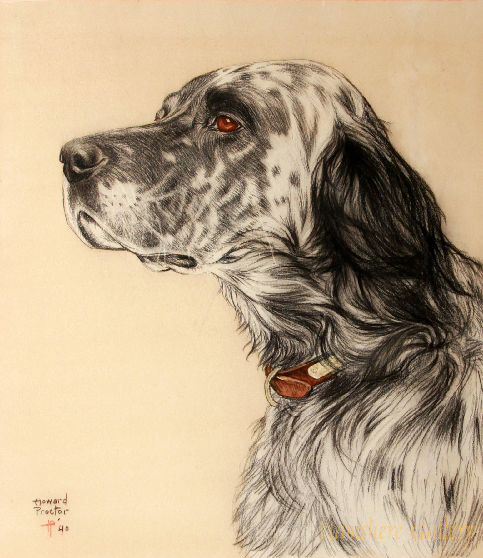 Click to see full size: Pastel on paper of a head study of an English Setter by Howard Proctor
