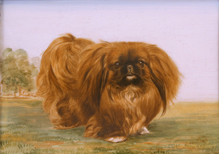 Click to see full size: Pekingese Miniature by Michael Weirs