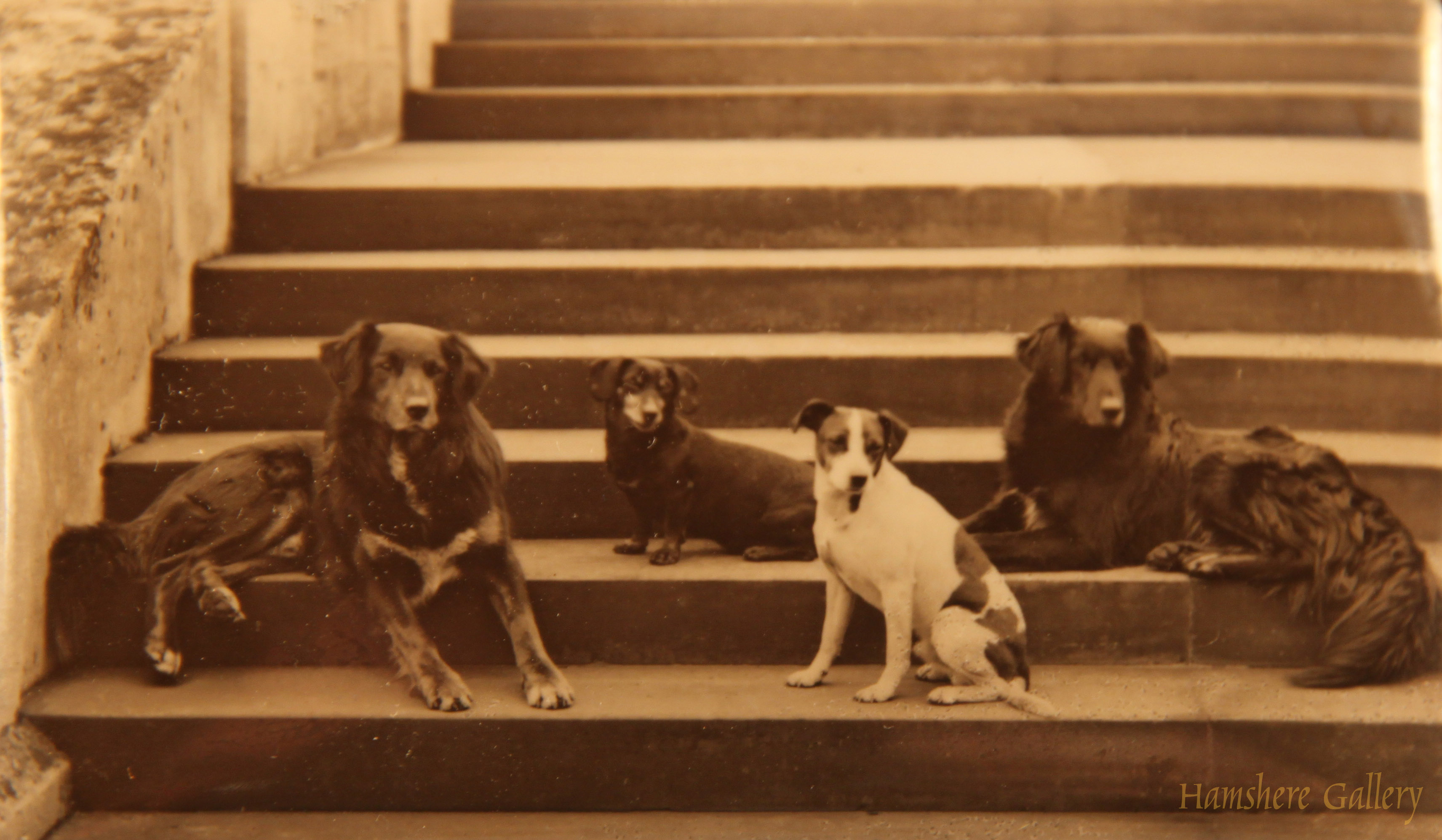 Click to see full size: An enamel of Queen Victoria's beloved dogs by  Alexander Lamont Henderson